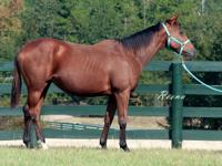 2011 TB Mare named Reena  Great mare that can go in any