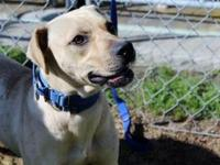 Reese's story Meet Reese! This sweet girl needs a home