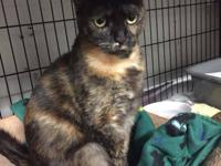 Reeses is a 2 year old female spayed cat ready for