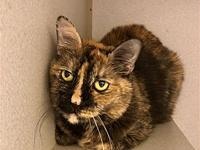 Reesie's story Primary Color: Tortoiseshell Weight: