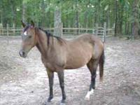 2007 reg gelding with the two white socks is 4 yr old