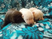 Young puppies were born 4-28-14 and must be ready for