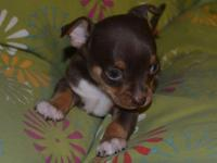This Lil boy is the last in his litter!. He will be all