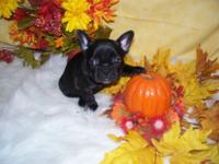 Two black and one brindle lady. Will be current on