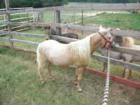"I have a 30"", palomino, Buckeroo and Alvadar Double"