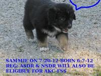 UPDATE: NEW PICS ADDED 7-31-12 I have 1 pups left from