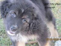 I have 2 pups left from a litter born 6-7-12 - Mom is a