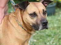 Reggie (Neutered)'s story This handsome 5-year old male
