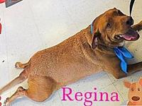 Regina's story Please understand we must conduct home