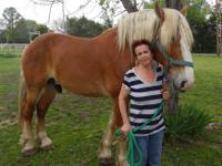 Ben is an18 hand registered Belgian Draft Horse with