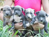 Puppies available! impressive top quality! will meet in