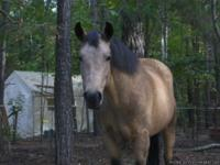 Gorgeous Buckskin mare.  She have a muscular