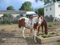 To many horses to ride, so, for sale a 4 year old