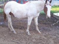 I have a registered paint mare for sale/trade. Her name