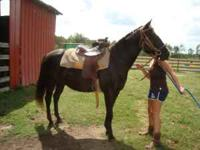 Have a 9 year old black registered paint mare(Misty),