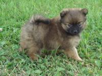 We have one female and male Black and Tan. One male and