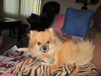 I have two female's pomeranian female's due 8/16 2015