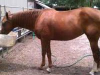She is a trained cow horse/reining horse. Lots of