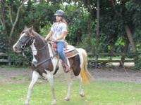 Beautiful registered Tennessee Walker Spotted Saddle