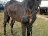 Soaffie is a registered Thoroughbred Mare, sixteen