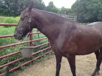Registered mare and gelding, mare is broke to ride,