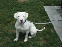 2012 Breeding Between: Harrison's Blue Souljah x PR