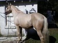 Great Horse, Proven Stud, Looking for a new home with