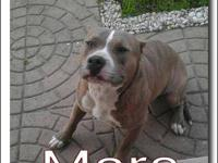 1 young male pitbull name Mars and 1 young female