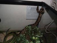 ????LOOKING FOR GOOD HOME CAN TAKE CARE OF PYTHON AND