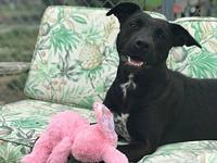 Relish's story Relish is a very sweet loving lab mix