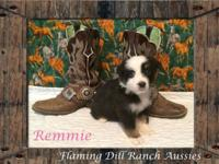 Ranch Raised ASDR Toy / Mini Aussie Puppies. Remmie ~