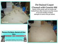 Visible spots on your carpeting from animals can be a a