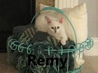Remy's story Our adoption fee is $125 and includes spay