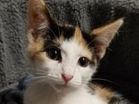 Remy *FOSTER NEEDED*'s story Meet Remy, an 8 week old,
