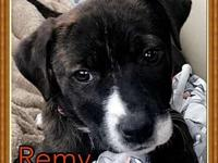 Remy's story Meet Remy! Her and her sister Stella were