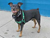 Remy is a fun little charmer who loves to play,