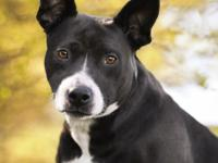 Renae is a beautiful mixed breed girl that is about 2