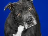 Reno's story Howdy! My name is Reno and I am a 7 year
