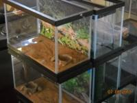 A NICE VARIETY OF AQUARIUMS FOR REPTILES THAT ARE