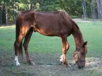 need supplies for rescue horses, hay, fencing and