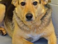 Neutered male German Shepherd mix. Young adult. Damon