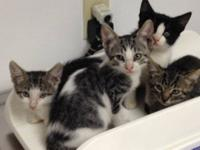 Four kittens rescued from backyard looking for a good