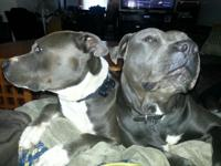 We have a Blue Pit that we rescued & & saved for 2
