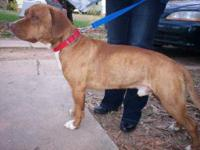 Retriever - Jackson - Medium - Young - Male - Dog