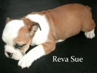 Born on August 3rd, Reva Sue is ready for a new home