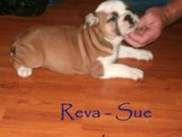 Born on August 3rd, Reva-Sue is ready for a new home.