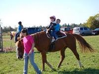 would like to sell a 12 yr old gelding. he is just over