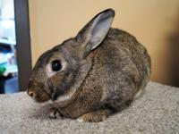 Rex is a very handsome, friendly rabbit. He likes to