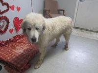 REX's story 19-8646B / KENNEL 89 / WEIGHT 100 LBS /