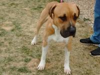 Rex is a young, mixed breed, male. He is super sweet,